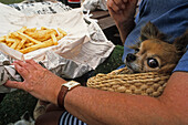 Woman and dog eating fish and chips outside, Coromandel Peninsula, North Island, New Zealand, Oceania