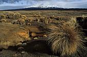 Rangipo Desert, Tongariro NP, Rangipo Dessert, volcanic landscape of lava and tussock grass, Tongariro National Park, North Island New Zealand, Lavawueste, World Heritage, Erbe der Menscheit