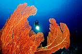 Korallenriff und Taucher, Coral reef and scuba div, Coral reef and scuba diver