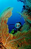 Taucher und Korallenriff, Scuba diver and coral re, Scuba diver and coral reef