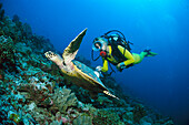 Turtle and diver, Maldives, Indian Ocean