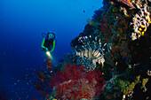 Diver, Lionfish, Pacific Ocean