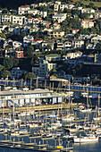 Oriental Parade Marina, Wellington, Yachts berthed in harbour, houses on hill, Jachten, capital, Hauptstadt
