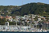 Suburban houses, Wellington, Houses on hill above Oriental Bay, inner city suburb, capital, Hauptstadt