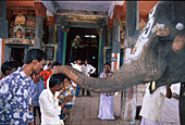 Temple elephant blessing hindus, South India, India, Asia