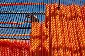 Drying of sari cloth, Sari Production, Pali, Rajasthan, India