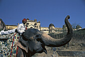 Elephant and Indian in front of palace, Amber, Jaipur, Rajasthan, India, Asia