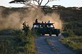 Jeep Safari, Serengeti National Park, Tanzania