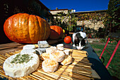 Cheese, cat and pumpkins of organic farmer, Provence, France