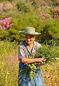 Old greek woman collecting herbs, Kardamyli, Peloponnese, Greece