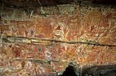 Rock paintings in the X-Ray style, Aboriginal art, Davidson Safaris, Aboriginal rock art galleries, Davidson Arnhemland Safaris, Northern Territory, Australia