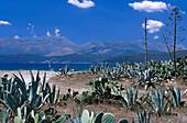 Agave and cacti, beach near Gytheio, Peloponnes, Greece
