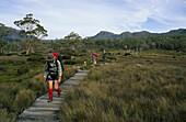 Hikers  walking the 85 Km Overland Track, Cradle Mountain National Park, Overland Track, Cradle Mountain-Lake St Clair National Park, Tasmania, Australia