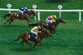 Horses with jockey gallopping, horse race