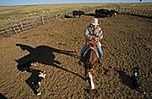 Cowboy Queensland, Australien, Cowboy, Damien Curr outback entertainer on his horse with dogs in a yard, Queensland, Australia