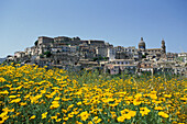 Flower meadow and town in the sunlight, Ragusa, Sicily, Italy, Europe