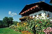 Farmhouse and garden in the sunlight, Ritten, South Tyrol, Italy, Europe