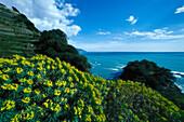 Küstenlandschaft unter Wolkenhimmel, Cinque Terre, Ligurien, Italien, Europa