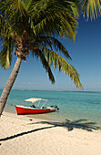 Sandy beach with palm tree in the sunlight, Mauritius, Africa