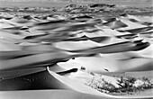 Footprints and marram gras in the desert Sahara, Algeria