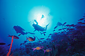 Two divers, Underwater picture, Caribbean