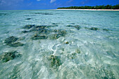 Water surface, Heron Island, Great Barrier Reef, Queensland, Australia