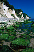 Steep coast, National park Jasmund, Ruegen, Mecklenburg-Western Pomerania, Germany