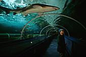 Shark in the Sydney Aquarium, Darling Harbour, Australien, NSW, shark observation in Sydney Aquarium