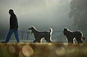 Spaziergaenger mit Hunden, Afganen