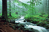 Kleine Ohe creek in deciduous forest, Bavarian Forest Nationalpark, Bavaria, Germany
