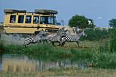 Zabra Safari tour with jeep, Kenia, Africa