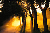 Landschaft, Abendstimmung