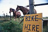 Horses on Pasture, Sark, Channel Islands, United Kingdom