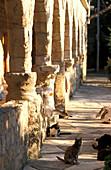 Agiou Nikolaou Monastery, Akrotiri, Cloister of cats, South Cyprus Cyprus