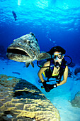 Large fish with diver, Cod Hole, Great Barrier Reef, Queensland, Australia