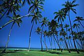 Palmen am Meer, Dominikanische Republik Karibik, Amerika
