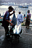 People transporting fishes at harbour, Muscat, Oman, Middle East, Asia
