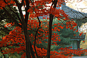 Hyang-Wonyong Pavilion in Park of Kyongbokkung Pal, Seoul, South Korea, Asia