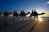Camel ride along cable beach, Broome, Western Australia, Australia