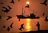 Seagulls and fishing boat on the sea at sunset, Paphos, Cyprus, Europe