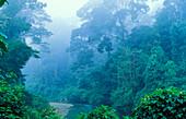 Course of a river in the rain forest, Borneo, Indonesia, Asia