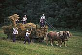 Mennoniten farmers with a haycart, hay harvest, near St. Jacobs Ontario, Canada, North America, America