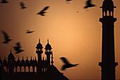 Jami Masjid mosque in Old Delhi, Delhi, India Asia
