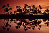 Palm trees in the afterglow, Nusa Dua, Bali Indonesia, Asia