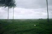 Busfenster, palme, jamaika, Karibik