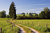 Track winding across meadows, Alpine Upland, Bavaria, Germany