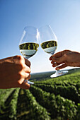 Couple clinking white wine glasses, vineyard in background
