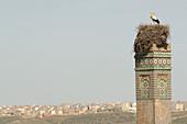 Stork in nest on minaret, Rabat, Sale, Morocco