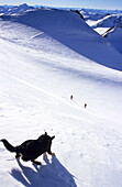 Dog on snowy slope ambuscading two skiers in the mountains, Wildspitze, Tyrol, Austria
