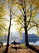 Woman sitting on park bench, rear view, Kochelsee, Upper Bavaria, Germany